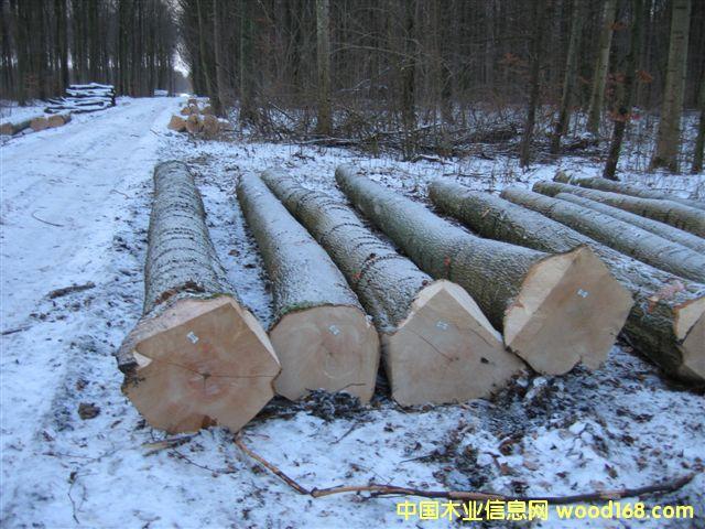 欧洲水曲柳原木