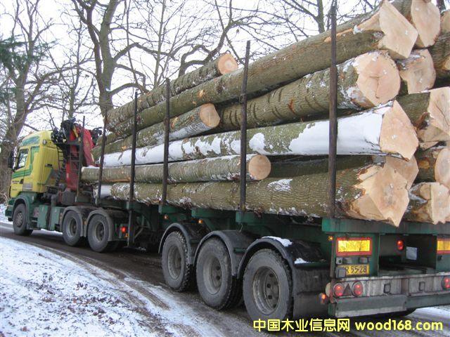 欧洲白栓原木(Ash logs)