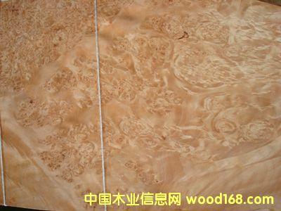 天旗木皮名贵系列―0.6欧枫树瘤