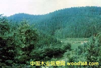 树种:杉木,杂木,松木