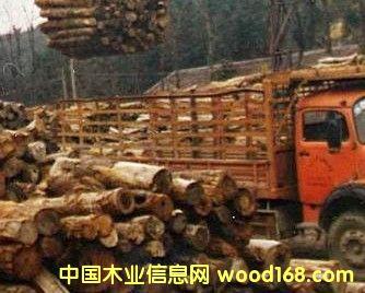 杉木,杂木