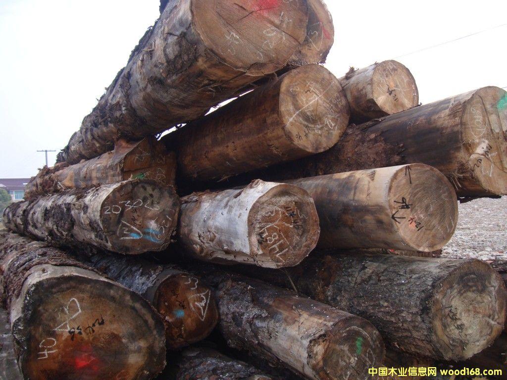 批发大径进口云杉,铁杉