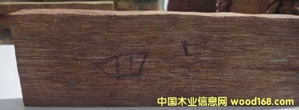 油仔木的详细介绍