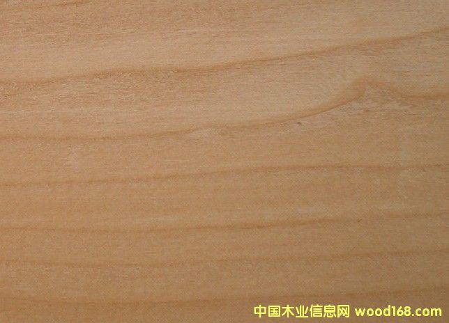 铁杉木HEMLOCK