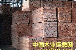 欧洲榉木,榉木毛板的详细介绍