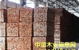欧洲榉木,榉木板材的详细介绍