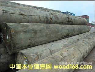 供应冰片香 山樟原木 板材 木材 (KAPA / KPXX)