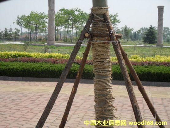 植树用杉木支撑杆