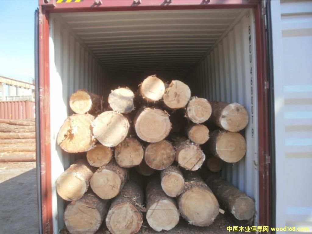 新一季乌克兰樟松原木