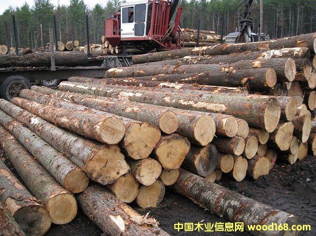 美国云杉原木