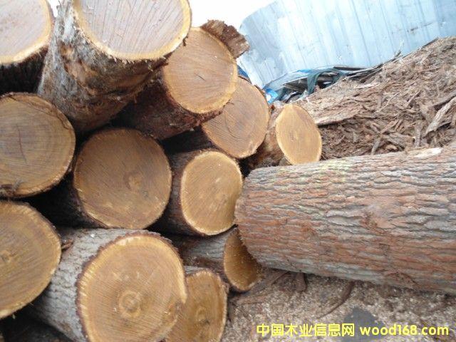 刨切级白橡原木的详细介绍