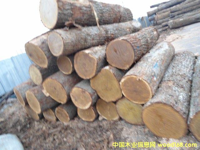 刨切级白橡原木