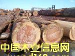 日本红心柳杉/落叶松