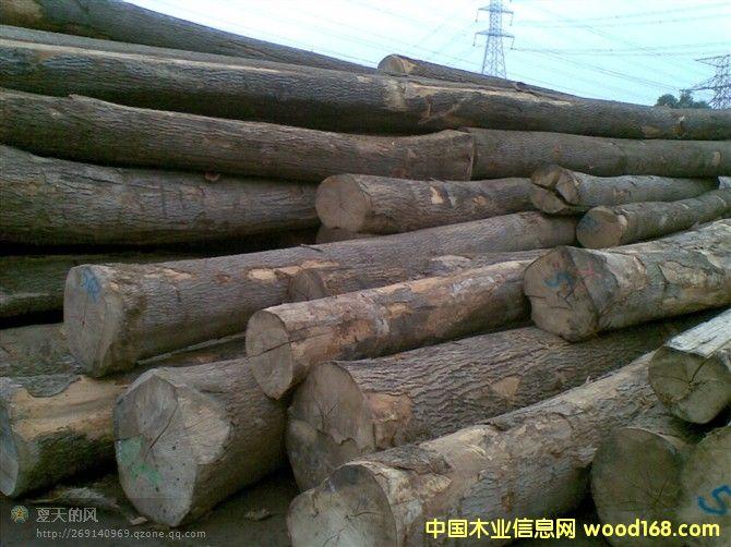 白蜡木原木-中国木业信息网专题报道