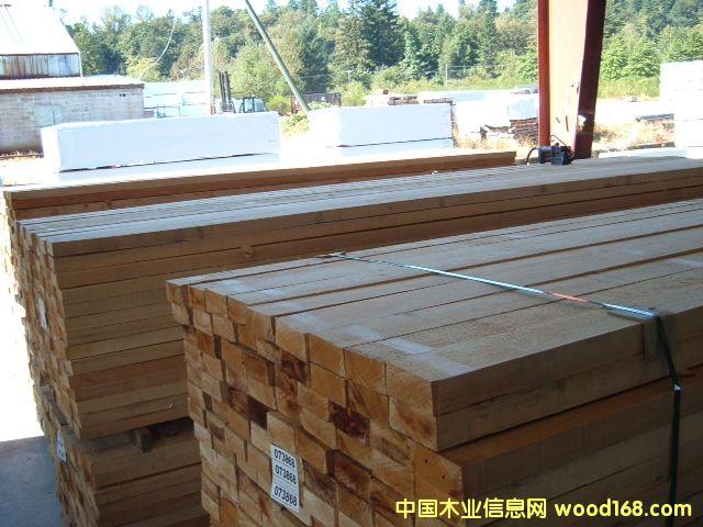 铁杉|2013042402