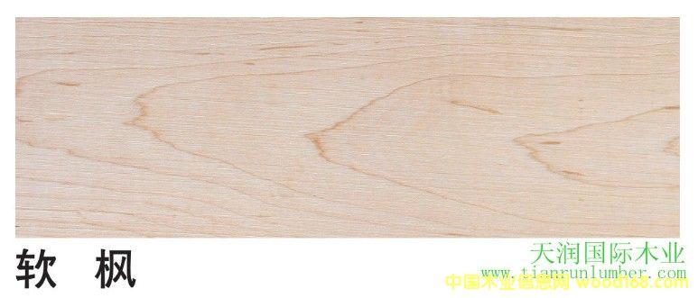 软 枫 Soft Maple