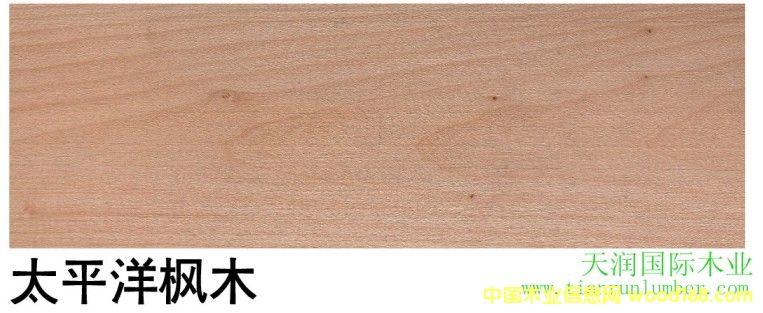 太平洋枫木 PC Maple