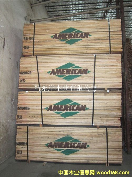 软枫-American
