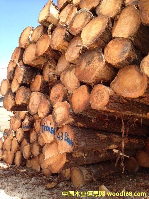 法国云杉原木