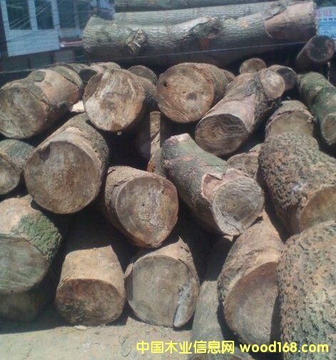 泡桐原木价格,最新木材市场价格和走势-中国木业信息
