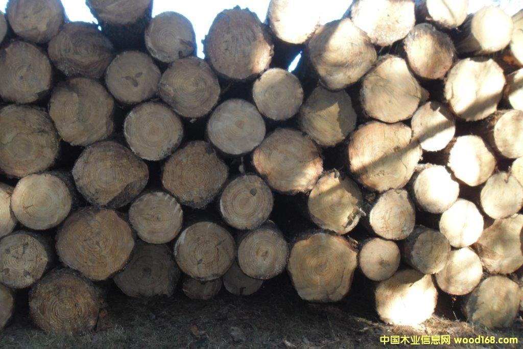 FSC松木原木