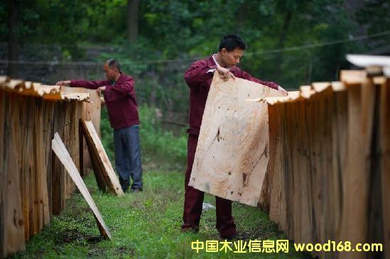 安徽叶集木材加工业促增收