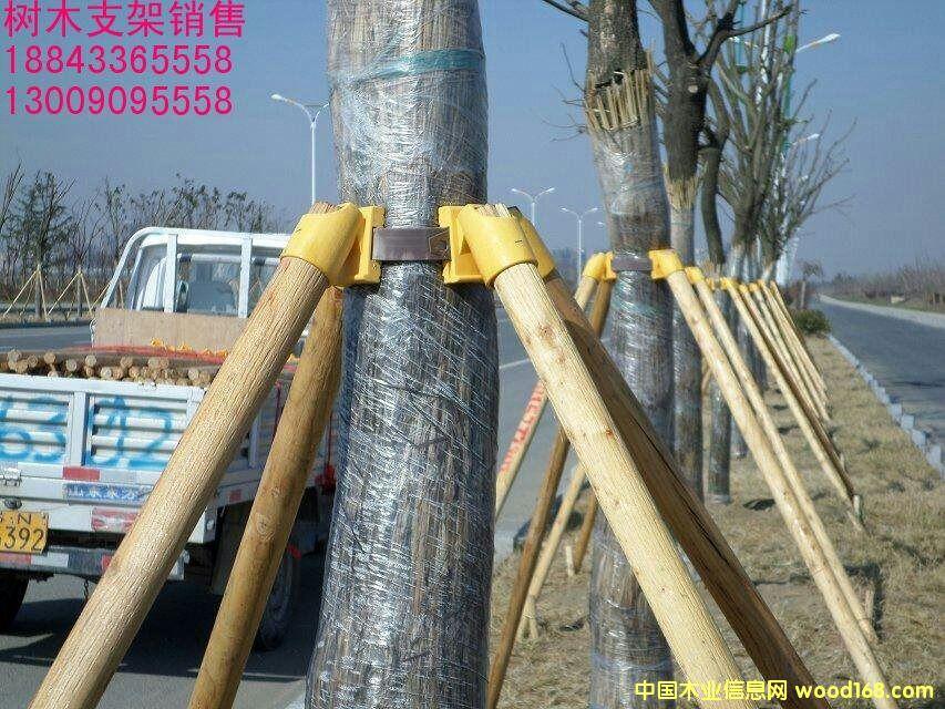树木支架的详细介绍
