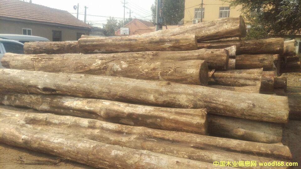 中国木业信息网 - 胡桃木原木专栏
