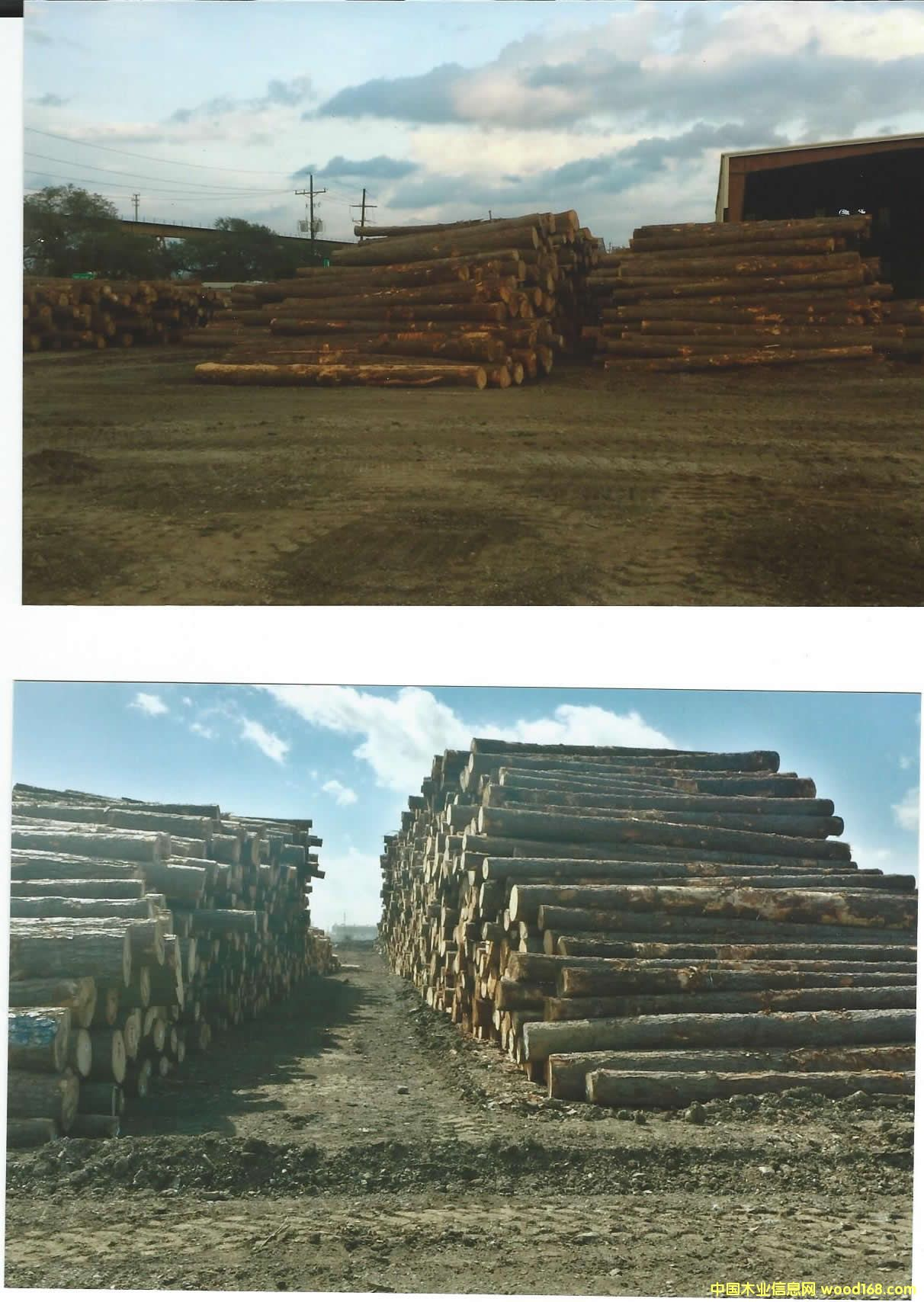 南方松 Southern Yellow Pine logs