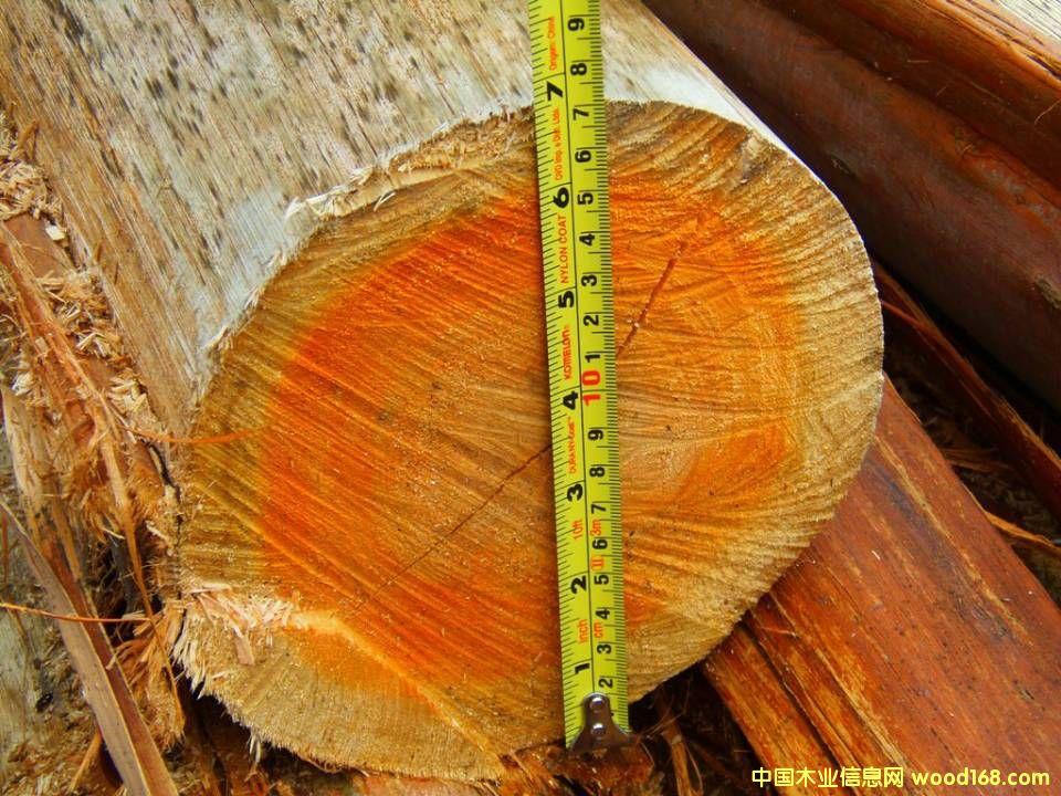 南美桉树原木