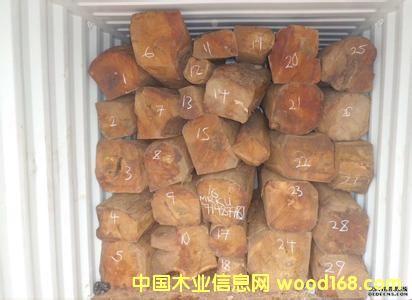 星凯源木业低价供应非洲小鸡翅 原木(非洲)