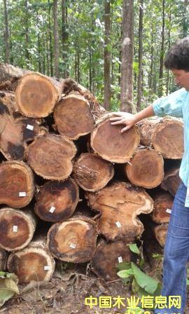 巴西柚木原木