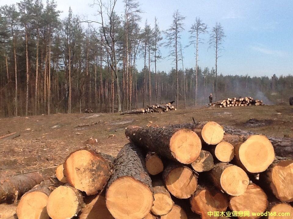 乌克兰云杉、樟子松、橡木原木及板材
