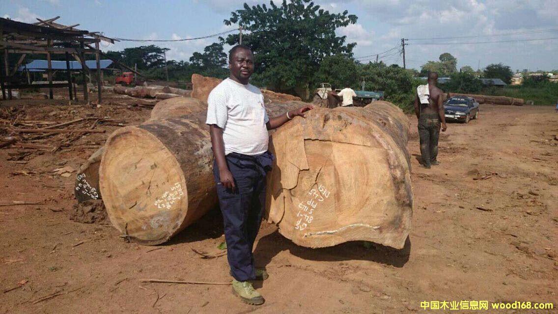 尼日利亚圆盘豆