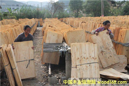 广西柳州木材加工带动农民增收致富