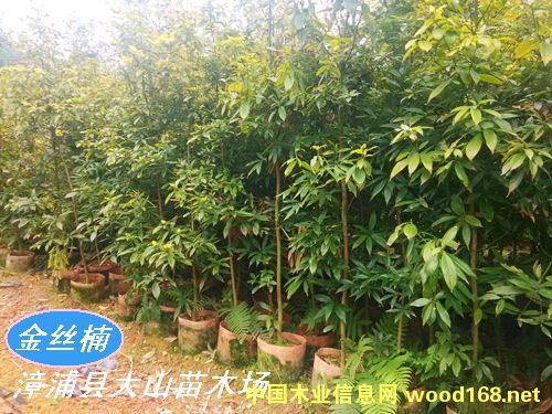 产品价格: 60元/根 产品规格: 3公分 详细描述: 金丝楠木是为名木