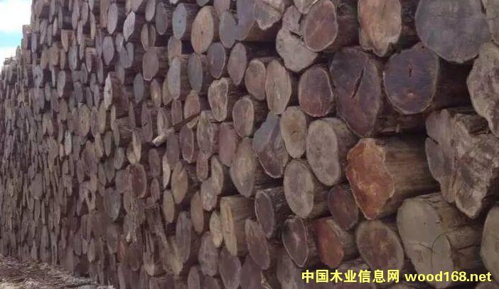 缅甸柚木的详细介绍