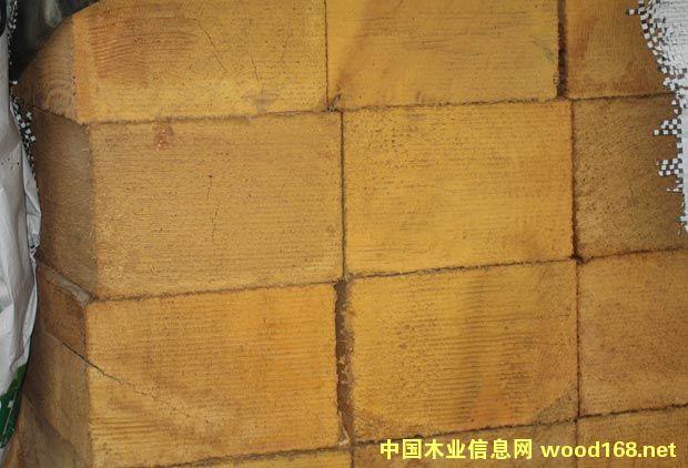 黄桧木、黄雪松