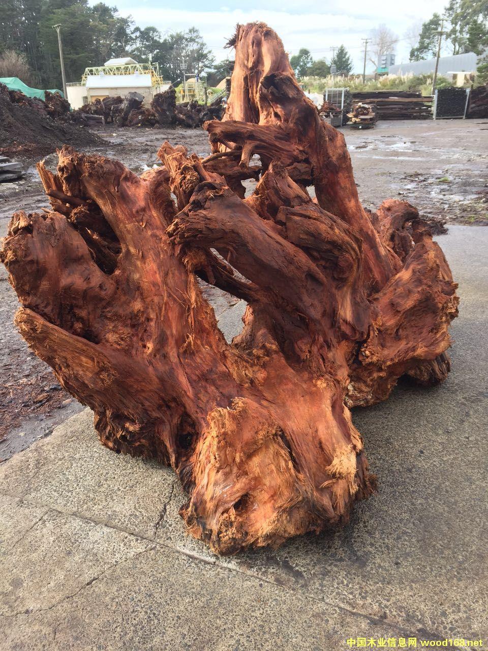 新西兰五万年阴沉木原木树根