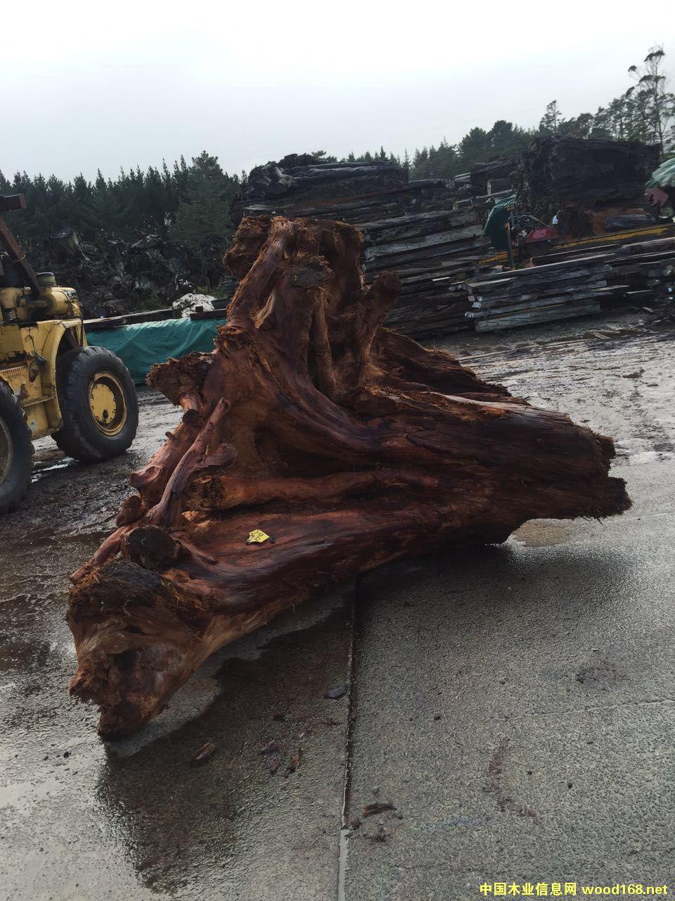 新西兰5万年阴沉木 树头