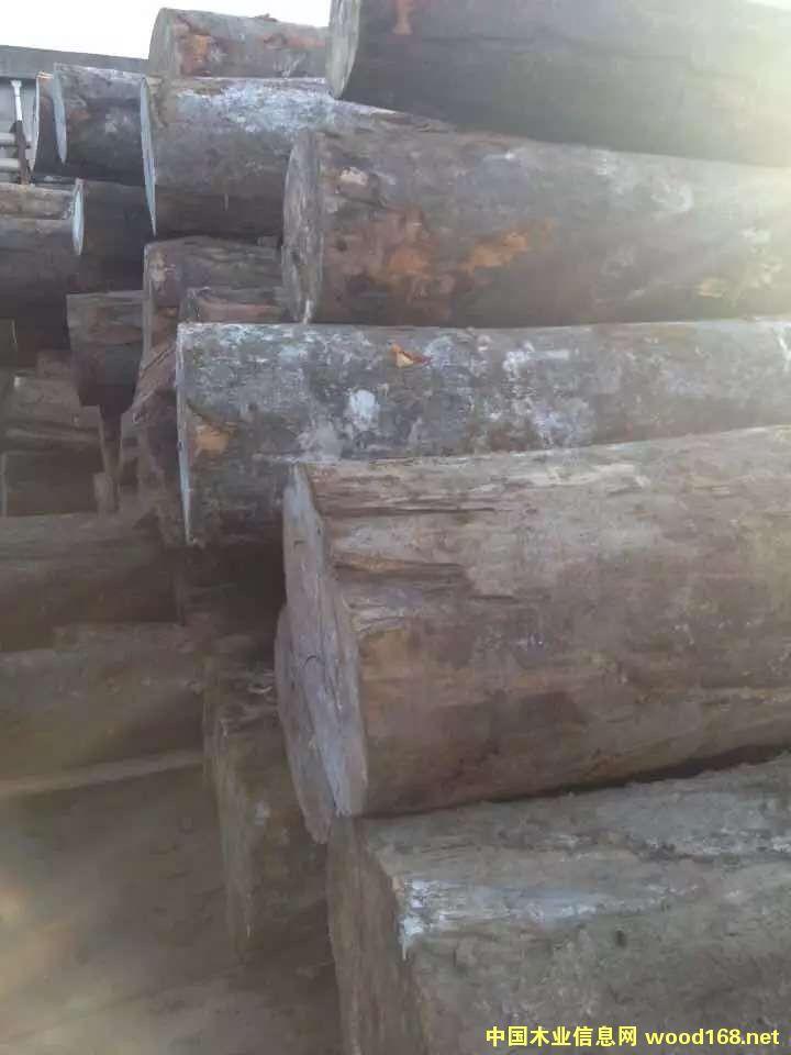 欧洲榉木原木现货