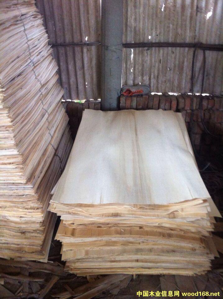 杨木板皮,杨木单板,杨木夹心电13914807777