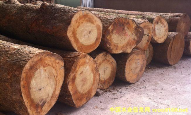 出售国内梧桐木原木