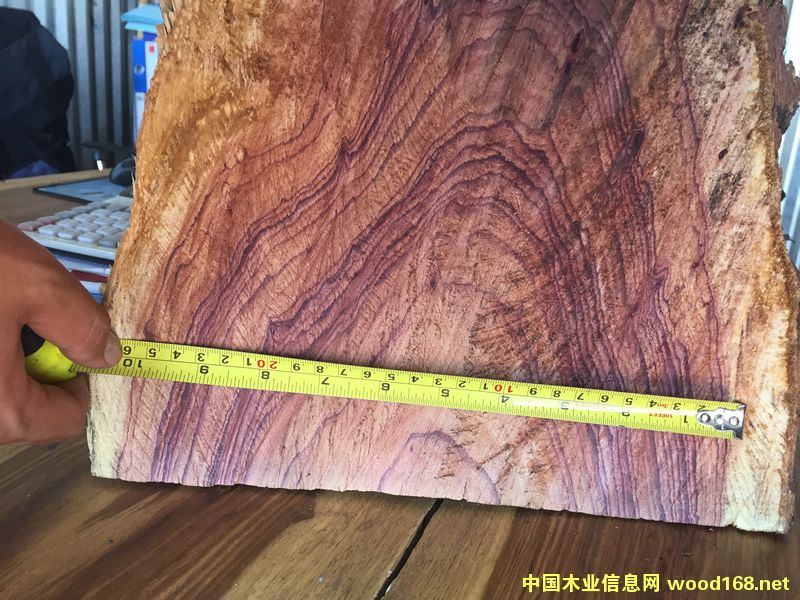 ZAMWINA 斑马木的详细介绍