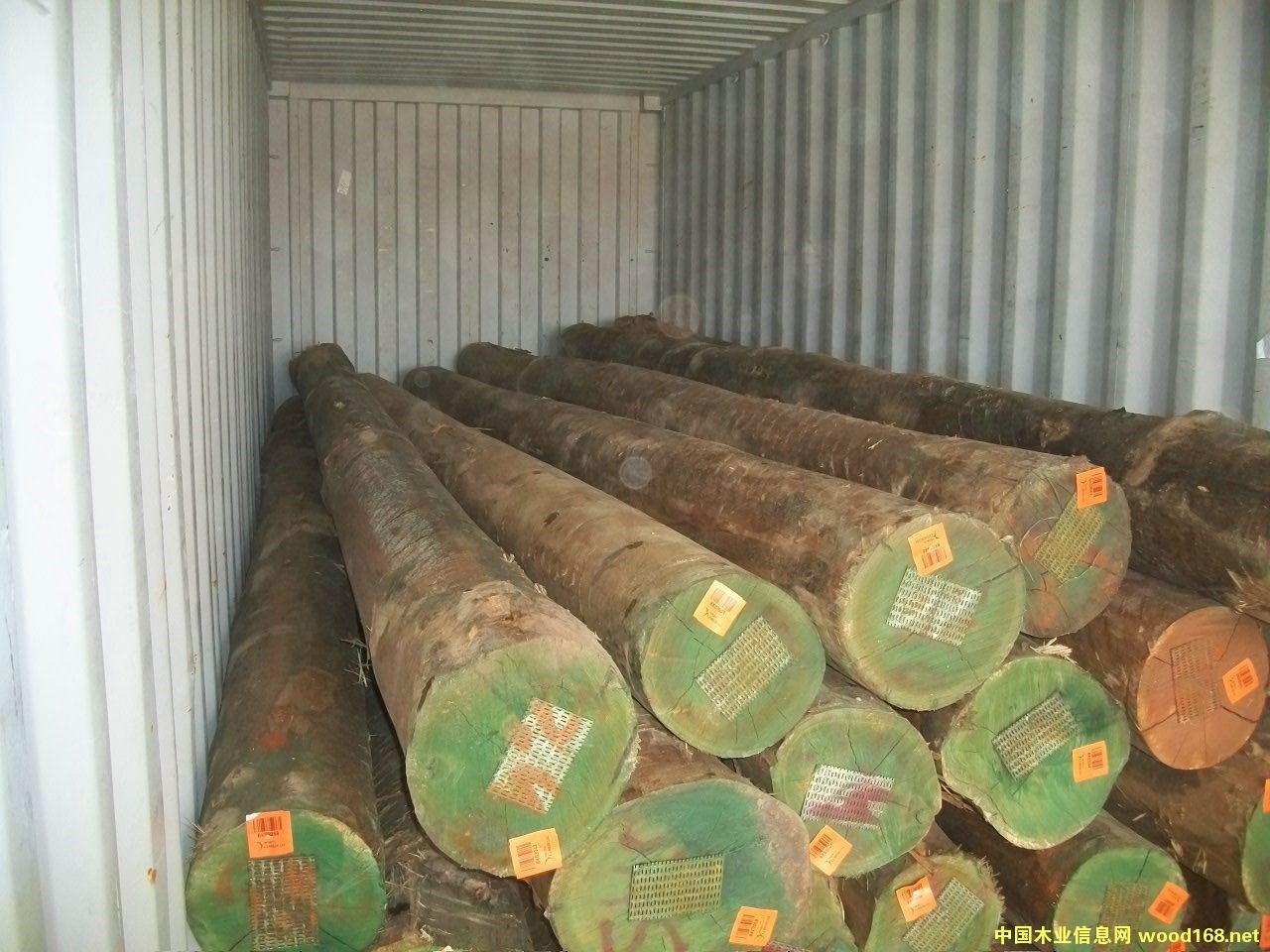FSC桉木原木