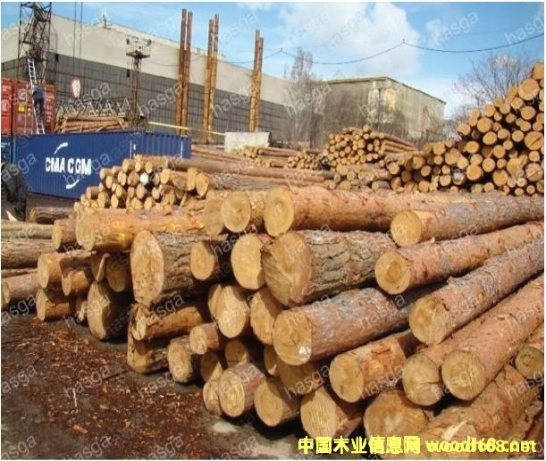 松木原木产品供应大市场