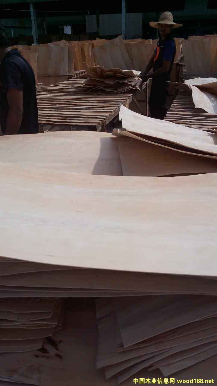 橡胶木旋切单板