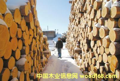 俄罗斯托木斯克原始森林砍伐的木材