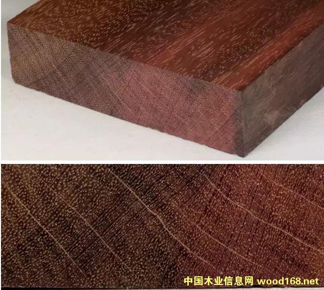 木材百科:墨西哥乌木王(库本斯沃铁木豆)