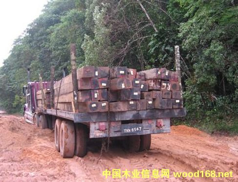 老挝木材出口